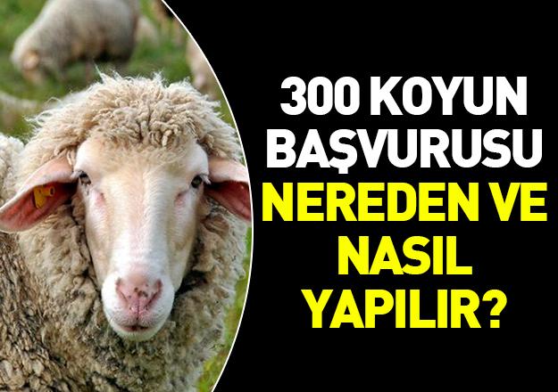300 koyun başvurusu nereden ve nasıl yapılır! TİGEM web sitesi giriş sayfası