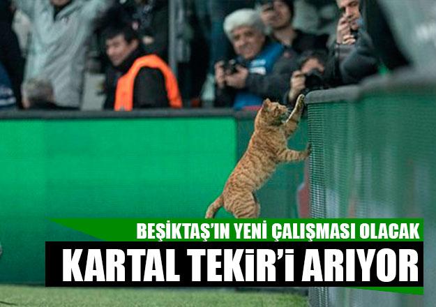 Beşiktaş'ın yeni gözdesi Tekir