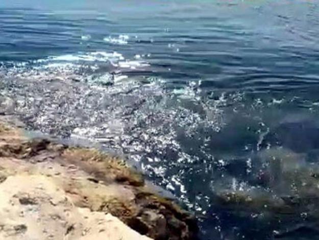 Akdeniz'de deprem! Son dakika depremleri