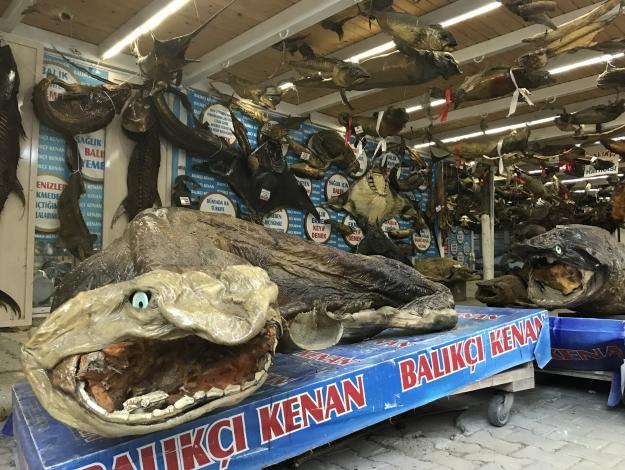Deniz Canlıları Müzesi rekor kırdı