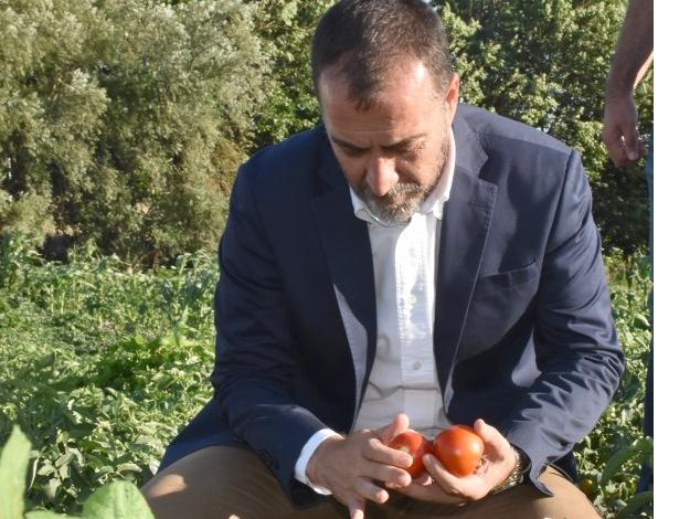 Silivri'de domates günleri