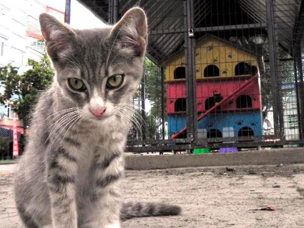 Kedi evleri sil baştan