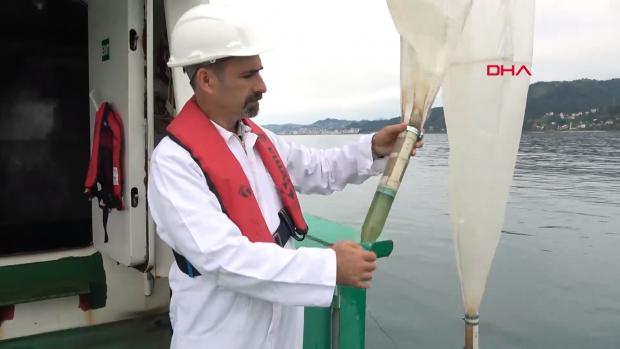 Karadeniz'de kirlilik nedeniyle bakteriyel tek hücreli organizmalar arttı